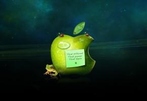 Apple, яблоко, записка, лягушка, божья коровка, капля, лепесток