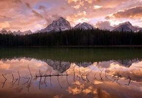 Обои озеро, отражение, коряга, лес, горы, облака