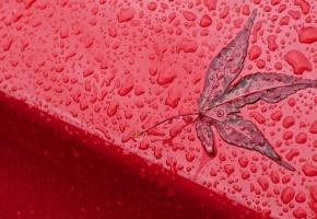 Обои красный, листик, дождь, капли