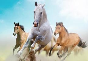 Обои кони, троица, свобода, бег, Лошади
