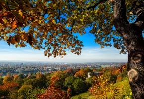 Dresden, Дрезден, Deutschland, Germany, Германия, город, вид, дома, мост, холм, дерево, деревья, осень