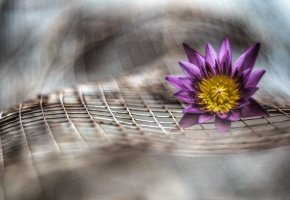 цветы, цветочек, фиолетовый, сетка, размытие
