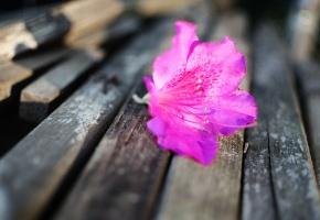 Обои цветок, скамейка, бутон, лепестки, лежит