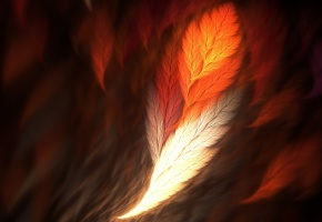 Обои перья, цвета, фон, пух