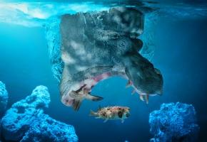 Обои бегемот, гиппопотам, рыба, вода, под водой, охота, пасть