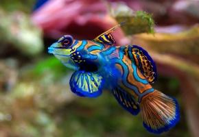 Обои рыбка, красивая, красочная, цветная, плавники