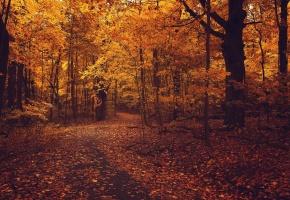 осень, листья, желтые, красные, лес, тропинка