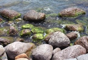 Обои камни, водоросли, вода, море, волны