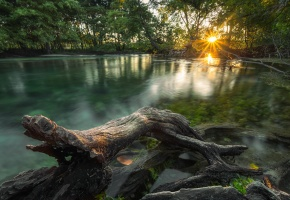 Обои утро, озеро, солнце, свет, коряга, дерево