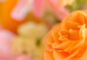 Цветок, лепестки, роза, оранжевая