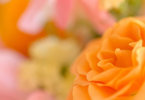 Обои Цветок, лепестки, роза, оранжевая