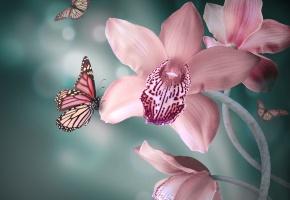 Обои цветы, Орхидея, розовые, бабочки, бутоны