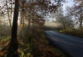 утро, осень, дорога, лес, туман