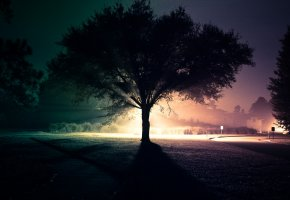 Обои улица, ночь, дерево, свет, дорога
