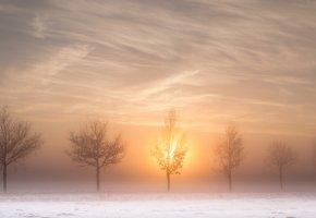 Обои дорога, деревья, солнце, утро, туман, зима