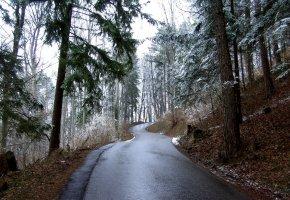 Обои дорога, снег, лес, ели, зима