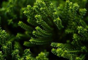 Обои мох, макро, травка, зеленая, макро