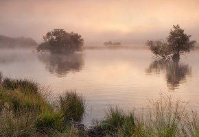 Обои река, туман, united kingdom, трава, деревья