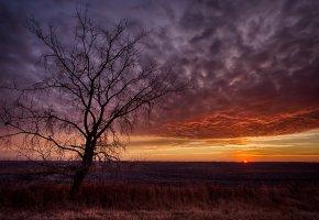 Обои закат, дерево, пейзаж, поле, облака, вечер