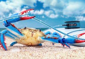 Обои краб, blue crab, клещи, ноги, пляж