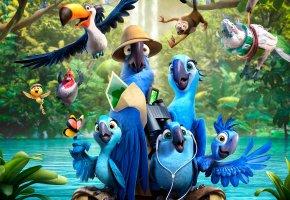 Обои Рио 2, Рио-де-Жанейро, Бразилия, птицы, попугаи, Голубчик, Жемчужинка, река, джунгли