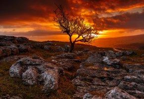 Обои закат, небо, дерево, пейзаж, камни, трава