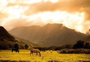 Обои Лужайка, горы, лошади, солнце, поле