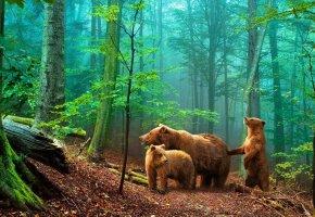 Обои мишки в лесу, медведи, лес, тропа, листья