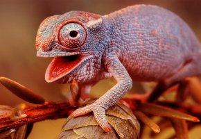 Обои хамелеон, цветной, ящерица, ветка