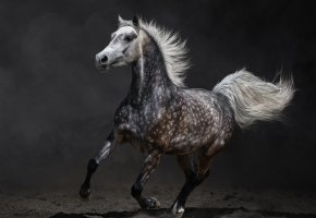Обои лошадь, бег, земля, пятна, грива