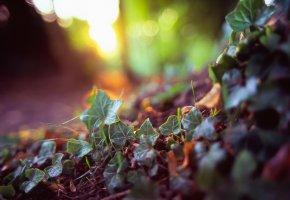 Обои трава, листочки, земля, лес, макро