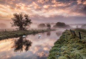 Обои рассвет, река, лебеди, ограда, трава, деревья, туман