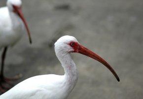 Обои птицы, клюв, шея, глаз, перья
