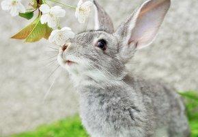 Обои уши, усы, кролик, ветка, Серый, мордочка