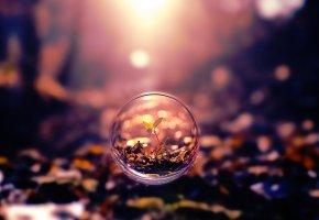 Обои капля, природа, красота, растение, пузырь, макро