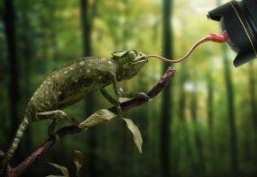 Обои рептилия, хамелеон, фотограф, Язык, камера