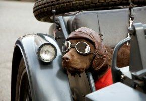 Обои собака, очки, мотоцикл, дорога, шляпа