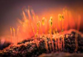 Обои макро, растения, мох, побеги, земля