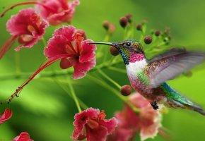 Обои цветок, красивый, красота, колибри, птица, птичка, природа