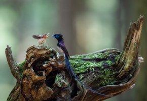 Обои птица, крылья, хвост, перья, красота, птенец, пень