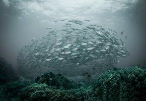 Обои океан, косяк, стая, рыба, дно, вода