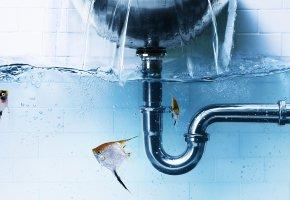 Обои рыбки, вода, ванная, скалярии, труба