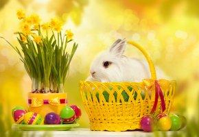 Обои Пасха, яйца, пасхальные яйца, кролик