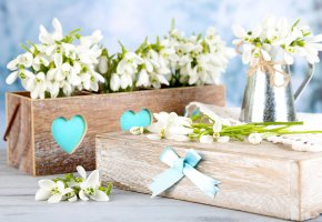 ���� snowdrops, white, spring, flowers, delicate, �����������, �����, �����, �������