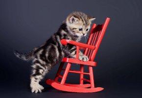 Обои кошка, взгляд, стул