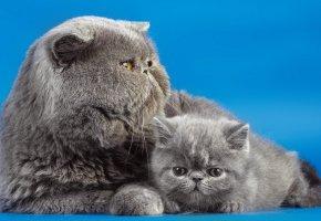 Обои кошки, дом, фон