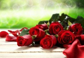Обои цветы, розы, красные, любовь, valentine's day