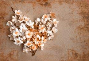 Обои сердце, ветки, цветы, весна, бумага, винтаж