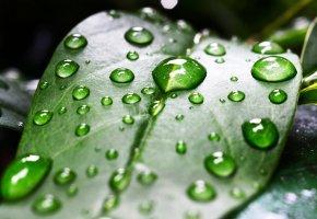 Обои листик, зеленый, капли, влага, макро