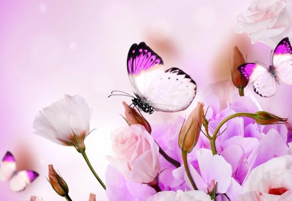 Обои картинки фото purple, flowers, butterflies, цветы, бабочки